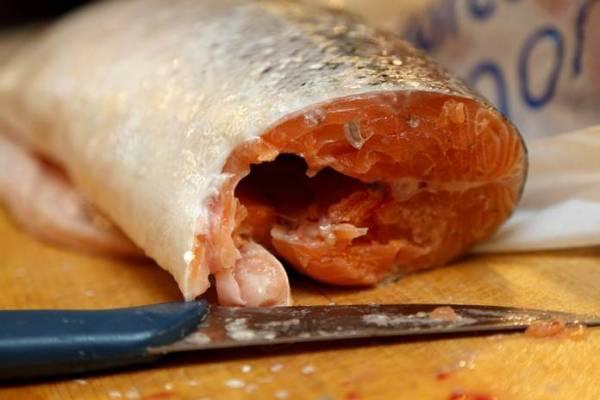 Cara-Membuat-Pupuk-dari-Kaldu-Ikan