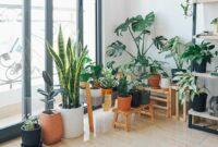 Rekomendasi-Tanaman-Indoor