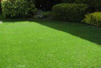 Cara-Merawat-Rumput-Jepang-yang-Baru
