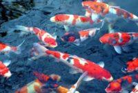 Pengertian-dan-Fungsi-Budidaya-Ikan-Konsumsi